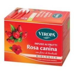 INFUSO ROSA CANINA